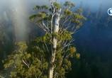 Сцена из фильма Тасмания: удивительная и прекрасная / Tasmania – Weird and Wonderful (2018) Тасмания: удивительная и прекрасная сцена 5