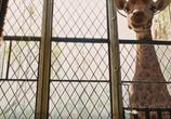 Фильм Удивительное путешествие доктора Дулиттла / Dolittle (2020) - cцена 5