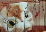 Мультфильм Кошки-мышки (1975) - cцена 4