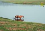 ТВ Viasat Nature: Дикий штат Карнатака, Индия / India's Wild Karnataka (2020) - cцена 7