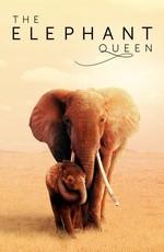 Королева слонов