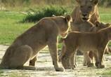 Сцена из фильма Львицы: борьба за выживание / Lions: The Hunt For Survival (2021) Львицы: борьба за выживание сцена 1