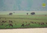 ТВ Viasat Nature: Дикий штат Карнатака, Индия / India's Wild Karnataka (2020) - cцена 3