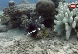 ТВ Выживание на коралловом рифе / Coral Reef Survivors (2019) - cцена 4