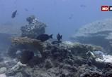 ТВ Выживание на коралловом рифе / Coral Reef Survivors (2019) - cцена 1