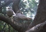Сцена из фильма Чайка по имени Джонатан Ливингстон / Jonathan Livingston Seagull (1973) Чайка по имени Джонатан Ливингстон