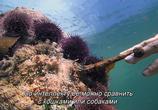 Сцена из фильма Мой учитель - осьминог / My Octopus Teacher (2020)