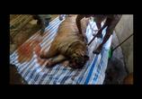ТВ Тигры: Охота на браконьеров / Tigers: Hunting the Traffickers (2020) - cцена 1