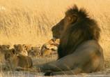 ТВ Сесил: Наследие короля / Cecil: The Legacy of a King (2021) - cцена 7