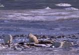 ТВ Королевство белых медведей / Kingdom of the Polar Bears (2021) - cцена 7