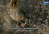 ТВ Королевство кенгуру на острове Роттнест / Rottnest Island Kingdom of the Quokka (2018) - cцена 7