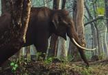 ТВ Viasat Nature: Дикий штат Карнатака, Индия / India's Wild Karnataka (2020) - cцена 5