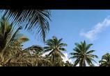 Фильм Голубые гавайи / Blue Hawaii (1961) - cцена 2