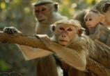 Сцена из фильма Королевство обезьян / Monkey Kingdom (2015)