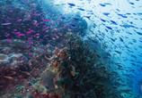Сцена из фильма Австралийская океанская одиссея / Ausrtalia's Ocean Odyssey (2020)