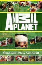Знакомство с ленивцами