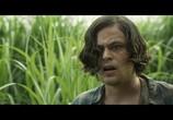 Сцена из фильма В высокой траве / In the Tall Grass (2019) В высокой траве сцена 11