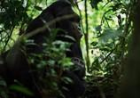 Сцена из фильма Скрытые чудеса Африки / Africa's Hidden Wonders (2020) Скрытые чудеса Африки сцена 2