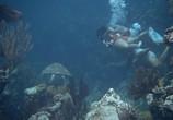Сцена из фильма Под водой! / Underwater! (1955) Под водой! сцена 5