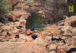Сцена из фильма Viasat Nature: Дикий штат Карнатака, Индия / India's Wild Karnataka (2020) Viasat Nature: Дикий штат Карнатака, Индия сцена 2