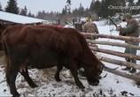 Сцена из фильма Discovery: Аляска: Последний рубеж / Alaska: The Last Frontier (2011)