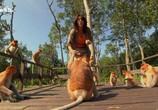 Сцена из фильма Чудаки животного мира. Обезьяны носачи / Freaks and Creeps (2011) Чудаки животного мира. Обезьяны носачи сцена 5