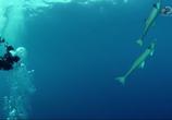 ТВ Неделя акул / Shark Week (2015) - cцена 3