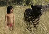Фильм Книга джунглей / The Jungle Book (2016) - cцена 1