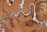 Сцена из фильма BBC. Земля: Взгляд из космоса / Earth from space (2019) BBC. Земля: Взгляд из космоса сцена 24