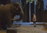 Сцена из фильма Мой парень из зоопарка / Zookeeper (2011)