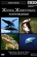 BBC: Жизнь животных - Плотоядные