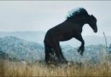 Сцена из фильма Восточный ветер 3: Наследие Оры / Ostwind 3: Aufbruch nach Ora (2017) Восточный ветер 3: Наследие Оры сцена 1
