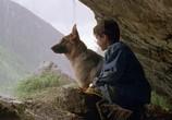 Фильм Малыш Рекс - четвероногий детектив / Baby Rex - Der kleine Kommissar (1997) - cцена 3