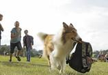 Сцена из фильма Лэсси. Возвращение домой / Lassie - Eine abenteuerliche Reise (2020)