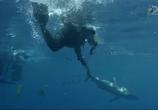 ТВ Неделя акул / Shark Week (2015) - cцена 2