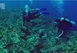 ТВ Discovery: Неделя акул. Самые лакомые кусочки недели акулы / Discovery: Shark Week. Shark bites: Adventures in Shark Week (2010) - cцена 1