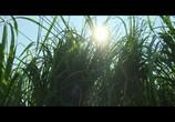Сцена из фильма В высокой траве / In the Tall Grass (2019) В высокой траве сцена 9